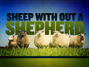 sheep-wihout-a-shepherd_t_nv